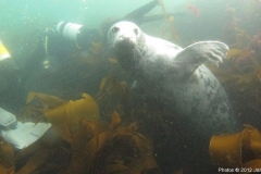 Farne Islands June 2012
