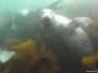 Farne Islands June 2012