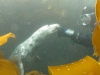Eammon Diving with the seals