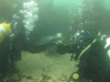 Eammon & Bev Diving with the seals