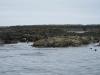 Seals on island
