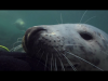 Diving with the seals