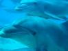 CADSAC Dive Trip - Dolphins