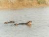 CADSAC Dive Club-lake-st-lucia-hippo4-aug2002