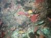 CADSAC Dive Club-uw-crayfish-aug2002