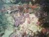 CADSAC Dive Club-uw-crayfish1-aug2002