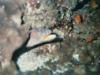 CADSAC Dive Club-uw-eel-aug2002