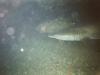 CADSAC Dive Club-raggie-aug2002