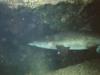 CADSAC Dive Club-raggie11-aug2002