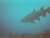 CADSAC Dive Club-raggie7-aug2002