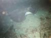 CADSAC Dive Club-ray-aug2002