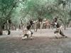 CADSAC Dive Club-zulu-fight-aug2002