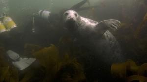 Follow me seal